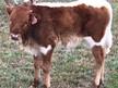 IM Bull 23/18